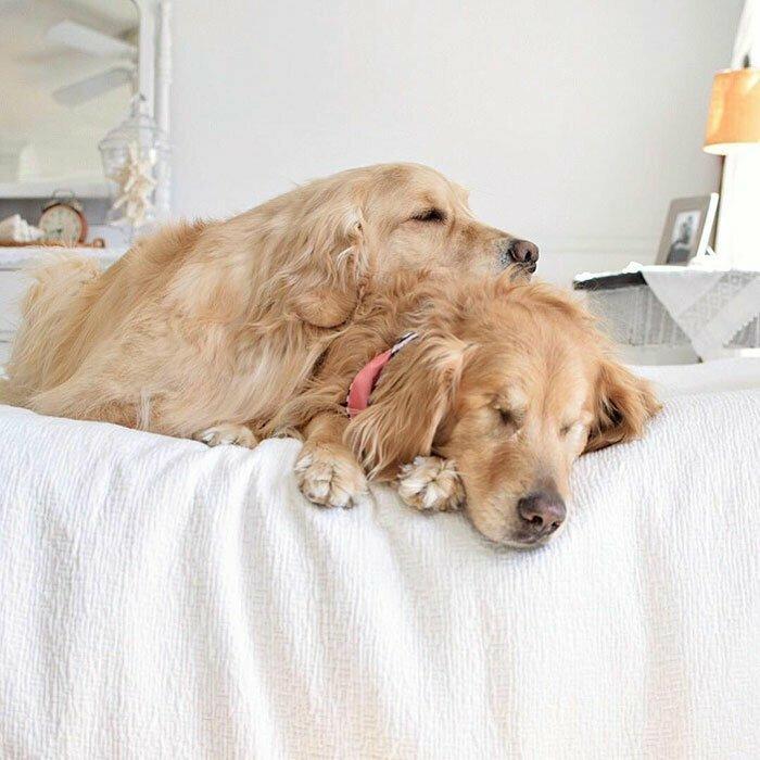 Пообщавшись с владельцами слепых собак, Ким поняла, что даже без зрения питомцы продолжают вести вполне счастливую жизнь