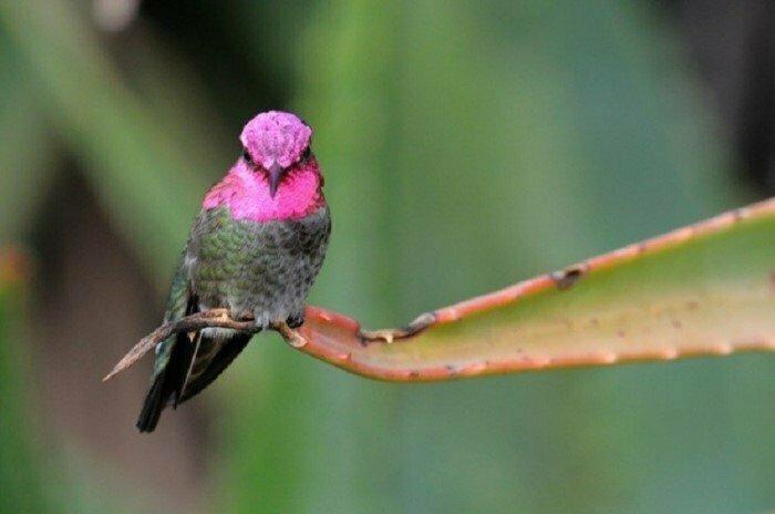 Колибри не могут ходить интересно, факты, фото