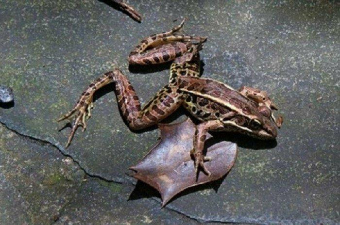 7 сентября 1953 года тысячи лягушек упали с неба на улицы город Лестер, США интересно, факты, фото
