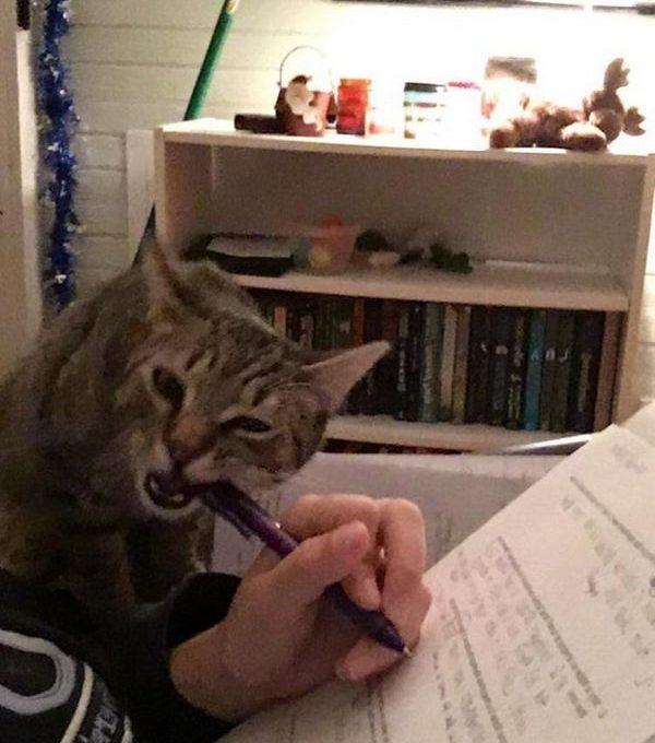 Для кота вы никогда не заняты