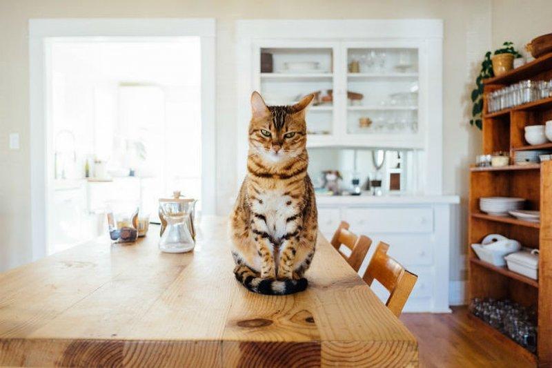 Кот здесь главный