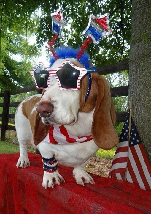 Красно-бело-синие собаки из США