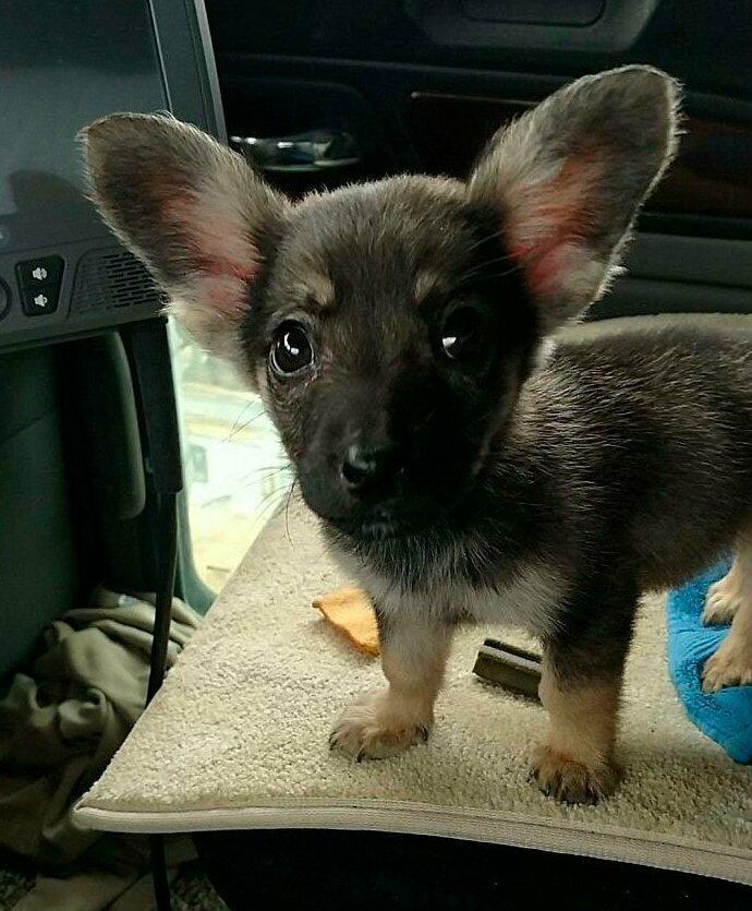 """""""Нашел щенка и назвал его Добби"""" домашние животные, истории, питомцы, ситуации, собака - лучший друг, собака друг человека, собаки, фото"""