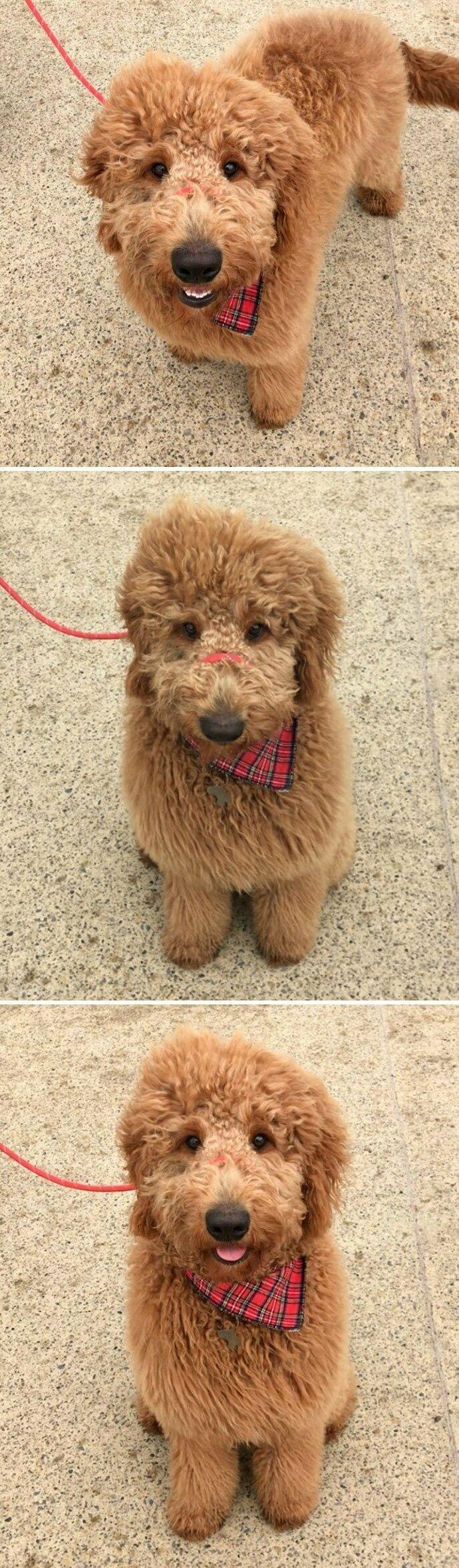 """""""Я увидела эту собаку на улице и попросила у ее хозяина разрешения сделать снимок. Пес увидел мой телефон, сел и улыбнулся"""""""