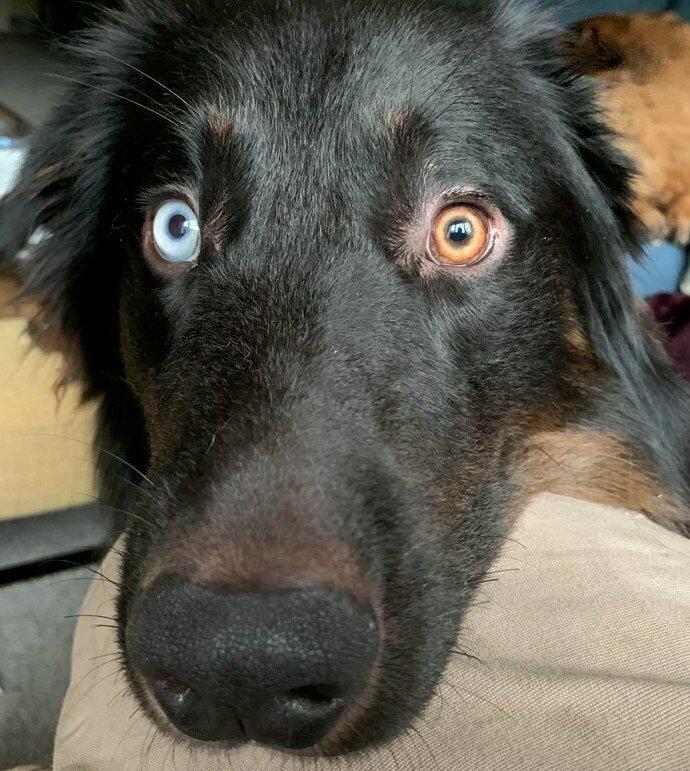Лед и пламя домашние животные, истории, питомцы, ситуации, собака - лучший друг, собака друг человека, собаки, фото