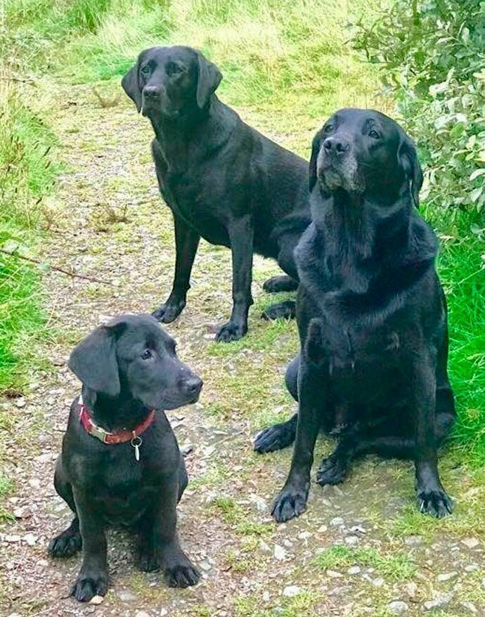 Три поколения одной семьи домашние животные, истории, питомцы, ситуации, собака - лучший друг, собака друг человека, собаки, фото