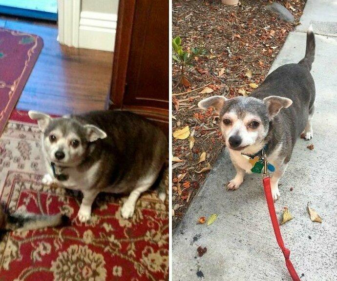 """""""Моя 90-летняя соседка несколько лет не выгуливала свою собаку, так что я вызвалась помочь ей. Я так горжусь, что Бадди похудел!"""" домашние животные, истории, питомцы, ситуации, собака - лучший друг, собака друг человека, собаки, фото"""