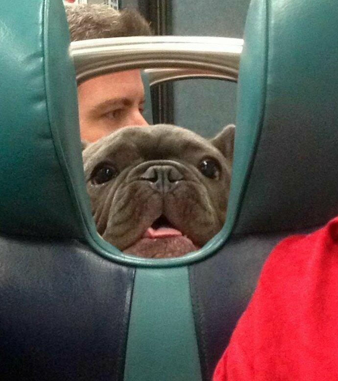"""""""Еду в электричке и вдруг вижу эту дружелюбную морду"""" домашние животные, истории, питомцы, ситуации, собака - лучший друг, собака друг человека, собаки, фото"""