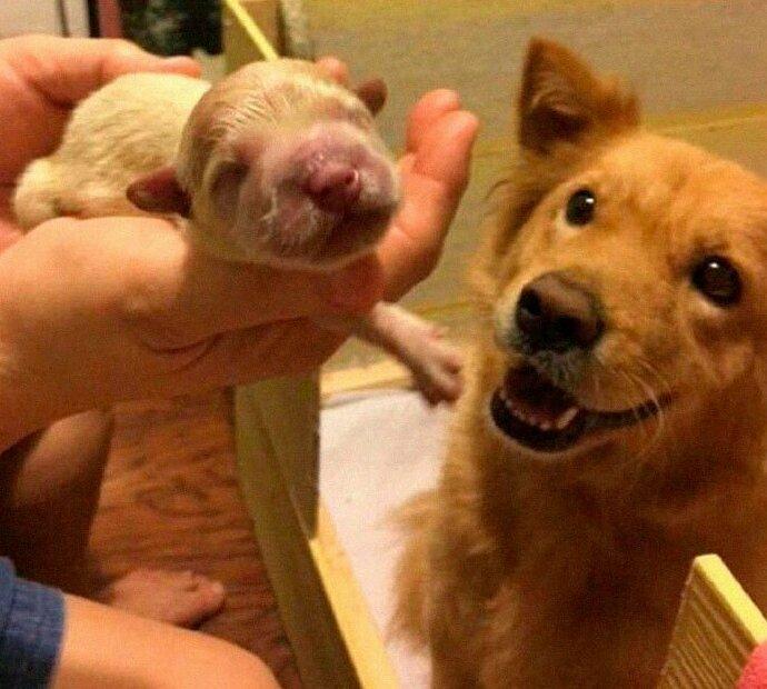 Гордый отец домашние животные, истории, питомцы, ситуации, собака - лучший друг, собака друг человека, собаки, фото