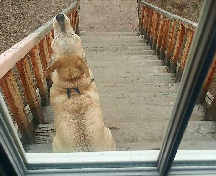 """""""Хиг будет сидеть и выть у меня под дверью, пока я его не впущу в дом. Фишка в том, что Хиг - не моя собака"""""""