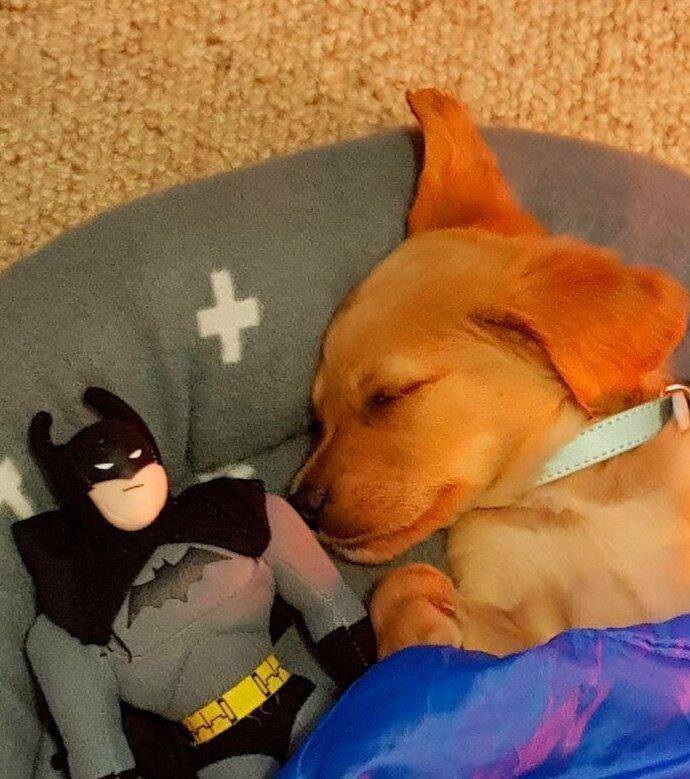"""""""Мы вчера взяли нового щенка. Я попросила моего 4-летнего сына уложить щенка спать. И вот что я увидела"""" домашние животные, истории, питомцы, ситуации, собака - лучший друг, собака друг человека, собаки, фото"""