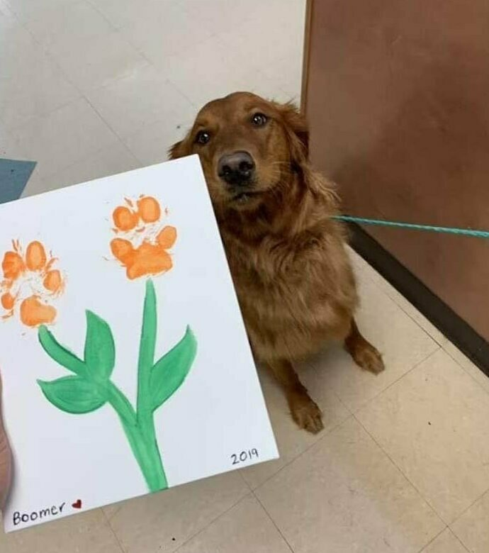 Он чрезвычайно гордится своей картиной домашние животные, истории, питомцы, ситуации, собака - лучший друг, собака друг человека, собаки, фото