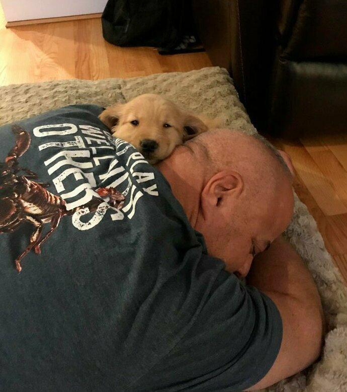"""""""Папа 4 года выпрашивал у мамы щенка, и наконец-то она ему это разрешила"""" домашние животные, истории, питомцы, ситуации, собака - лучший друг, собака друг человека, собаки, фото"""