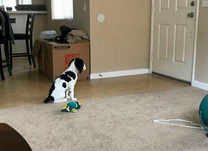 """""""Недавно мы с другом завели щенка. Сегодня я впервые ушла на учебу и оставила щенка дома. Друг прислал мне это"""" домашние животные, истории, питомцы, ситуации, собака - лучший друг, собака друг человека, собаки, фото"""