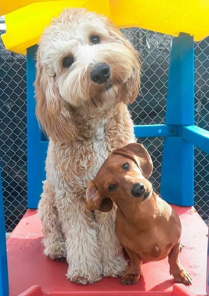 """""""Мой пес Кертис (слева) и его лучший друг Саймон на собачьей площадке"""""""