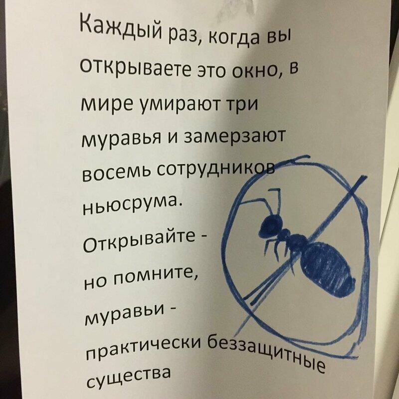 Заботятся о муравьях надпись, объявления, прикол, смешная надпись, смешно, смешные объявления