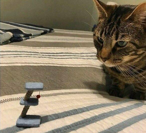 Заказал через интернет для кота новую игрушку лузеры, неудачники, победитель по жизни, прикол, смешно, фейл, фото