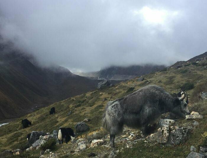 """""""Три недели я путешествовал в окрестностях горы Манаслу в Гималаях. За все это время лишь раз ее пик слегка проглянул сквозь туман"""""""