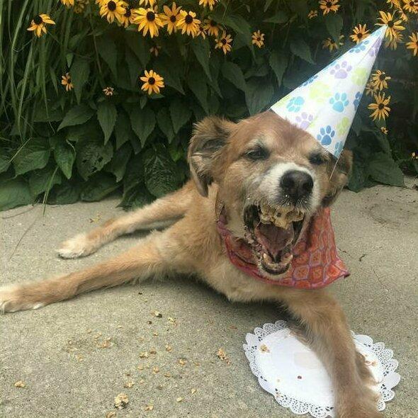 День рождения удался выходки, звери, кадр, подловили, уморительные, фейл, фото, хозяева