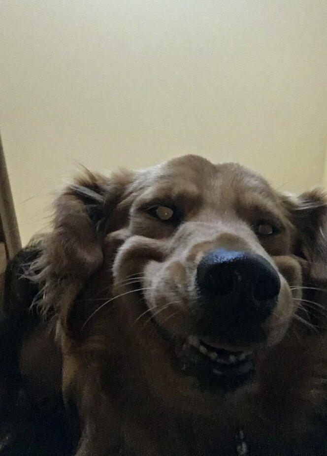 Моя собака иногда превращается в зомби выходки, звери, кадр, подловили, уморительные, фейл, фото, хозяева