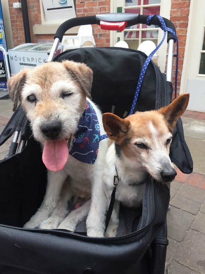 Обычно у Николы не более двух собак