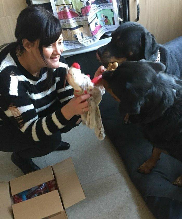 Никола тратит примерно 500 фунтов стерлингов (около 38500 рублей) на каждую собаку