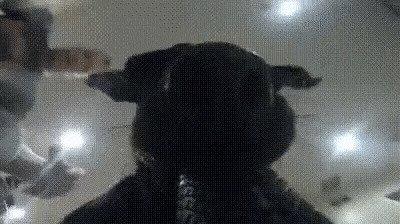 Самая эффектная гифка в подборке: пёс украл экшн-камеру