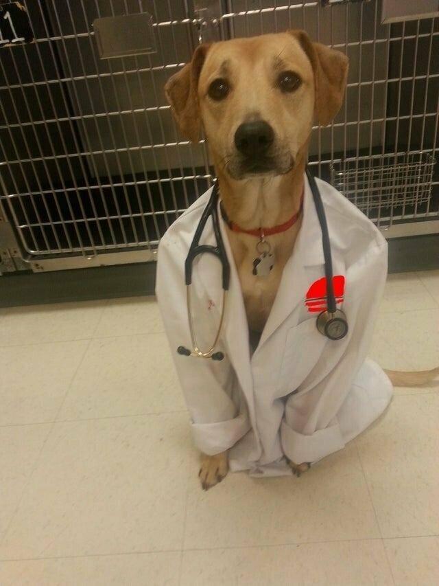 Четвероногий доктор