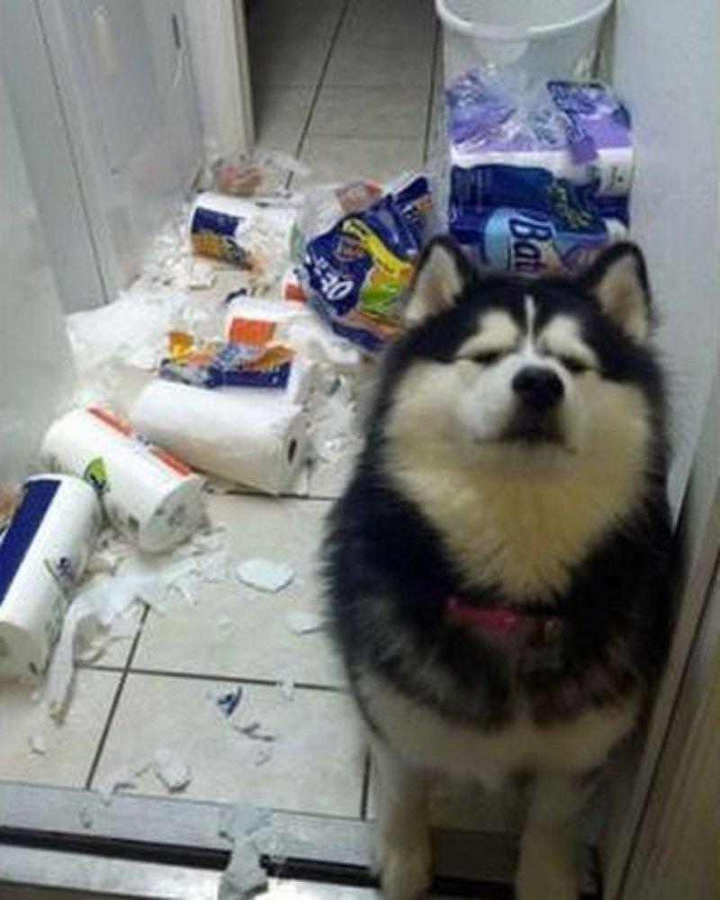 Туалетная бумага - это зло