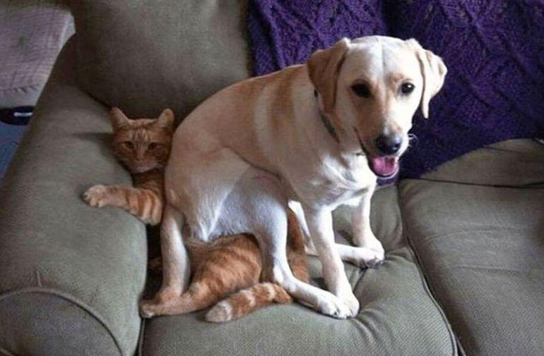 Правила для слабаков: домашние животные в отрыве