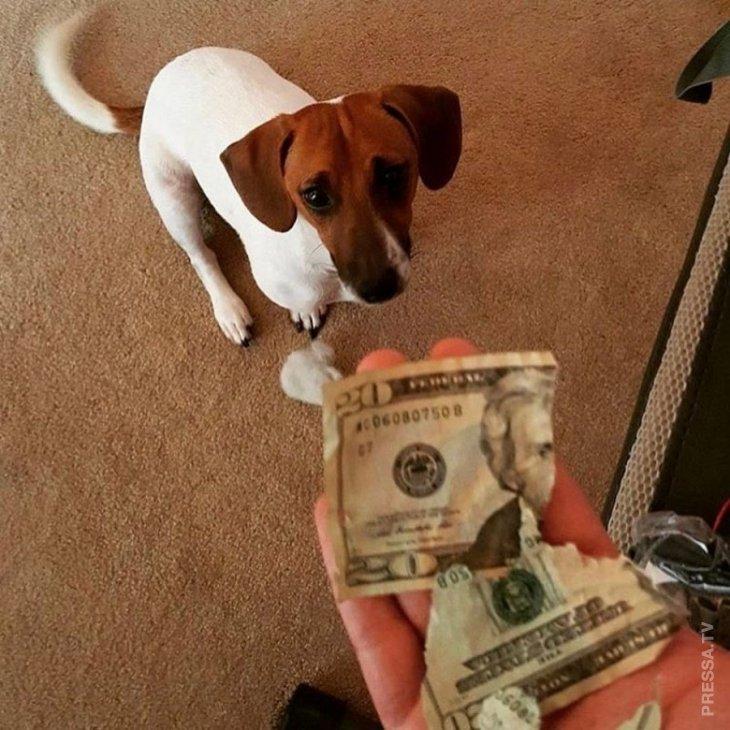 Деньги слишком переоценены
