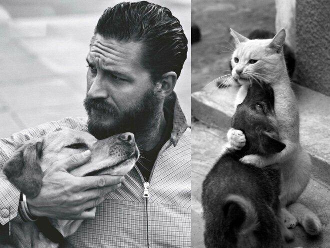 Коты против мужчин
