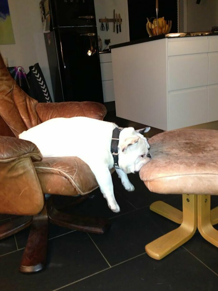 Неудобные, но уморительные позы, в которых собаки умудрились уснуть