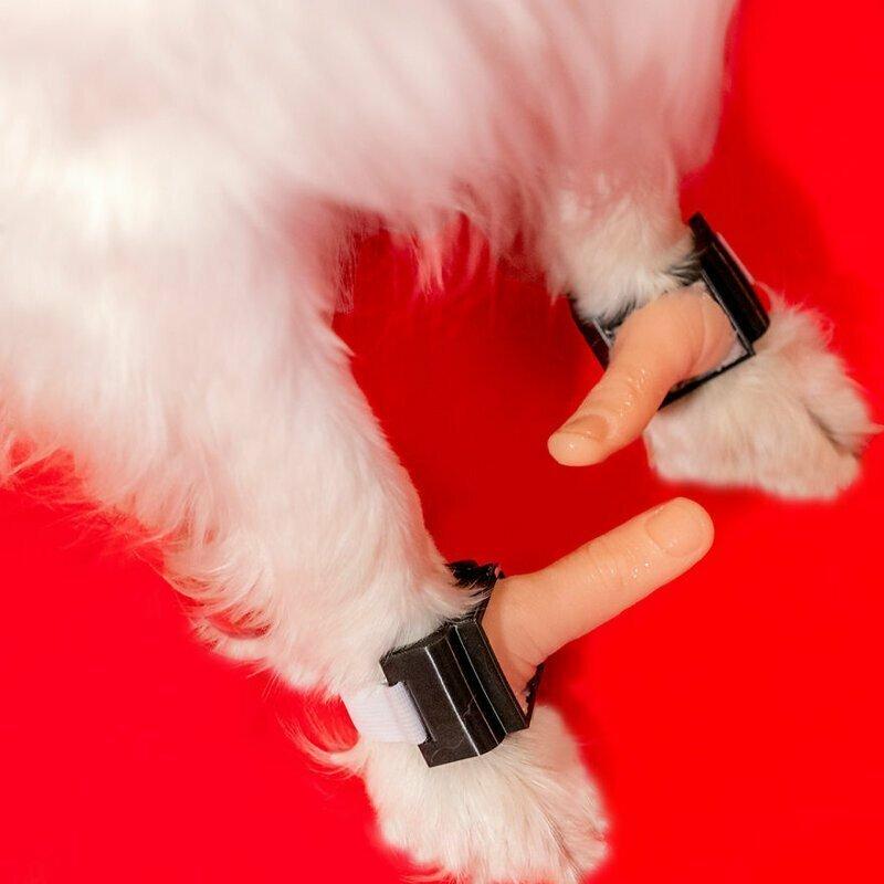 Если собаки - лучшие друзья человека, разве не заслуживают они тоже иметь большие пальцы?