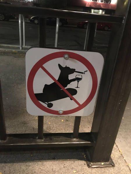 Покажите нам такую собаку!