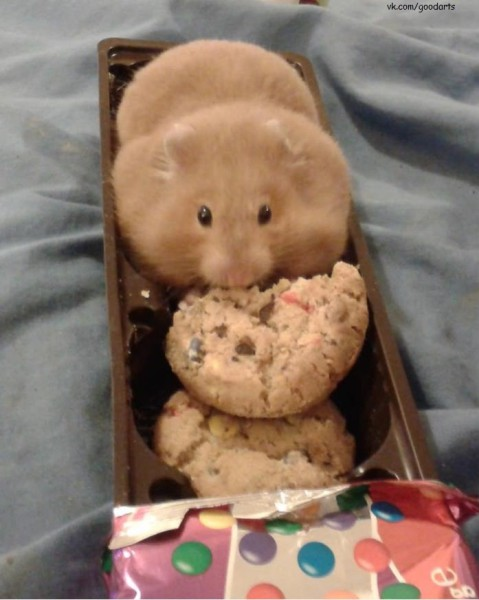 Печеньки!