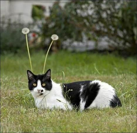 Кошачий роутер
