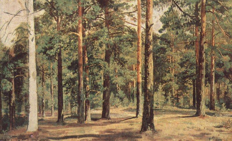 Мало травы: отчего она хуже растет в сосновом лесу