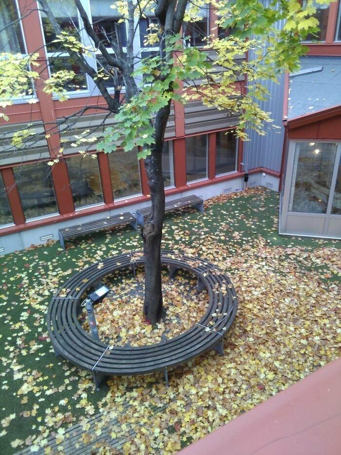 """""""Во внутреннем дворе нашей школы сделали мини-парк. Но туда не ведет ни одна дверь"""""""