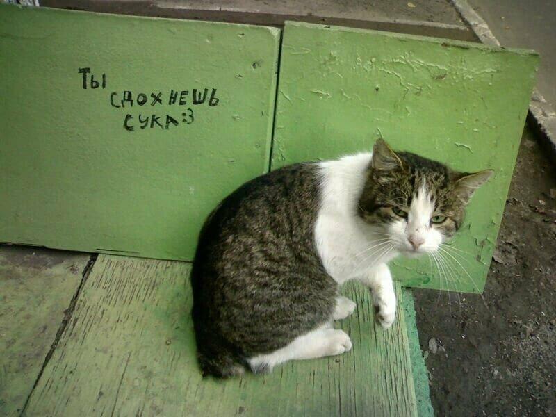 Не спорь с котиком!