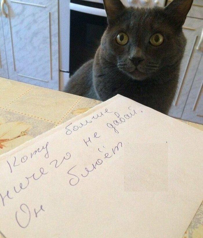 Кот, кстати, так не согласен