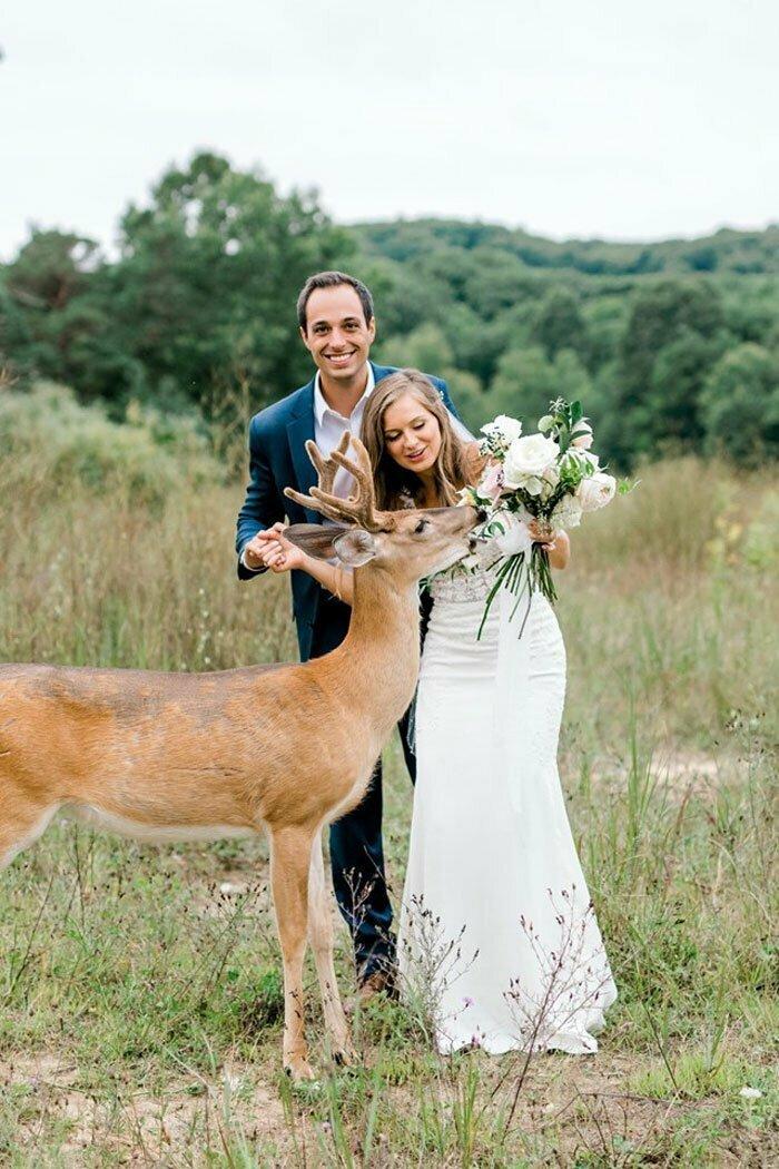 Очаровательный фейл, или как олененок ворвался в свадебную фотосессию