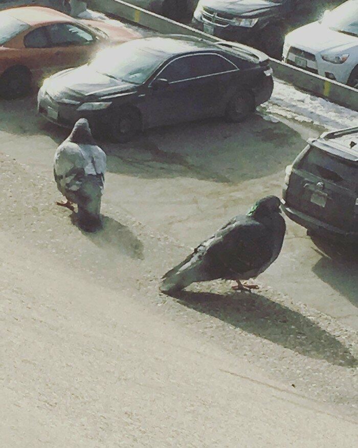 Может хватит уже кормить голубей?