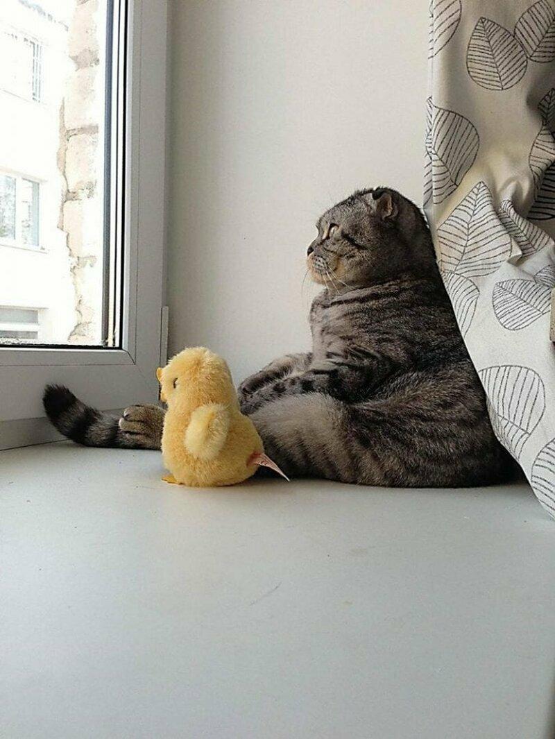 Кошачий ждун