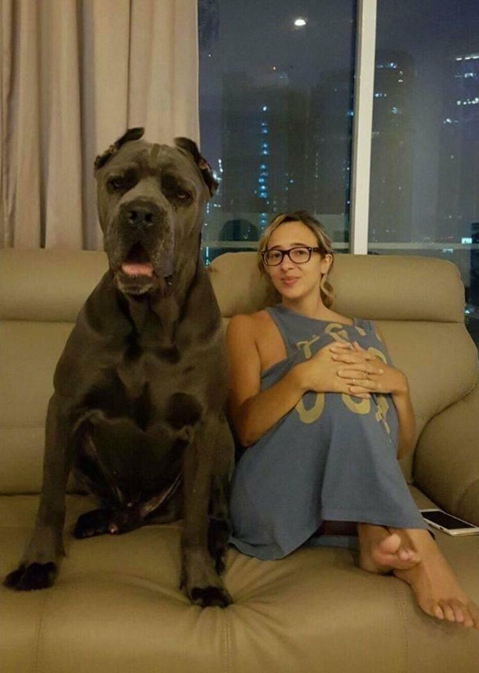 Собака по сравнению с её хозяйкой