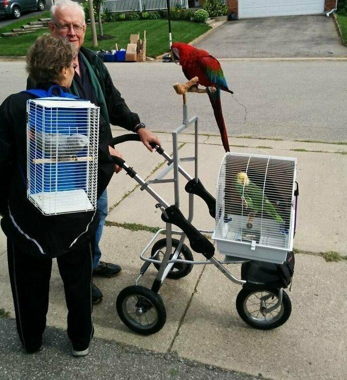 Попугаям тоже нужен свежий воздух