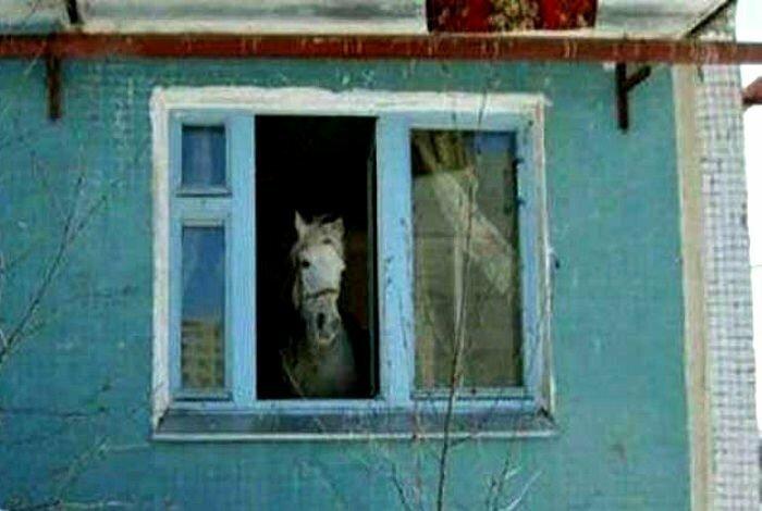 А некоторые соседи не просто включают запись лошадиного ржания, а конь у них живёт