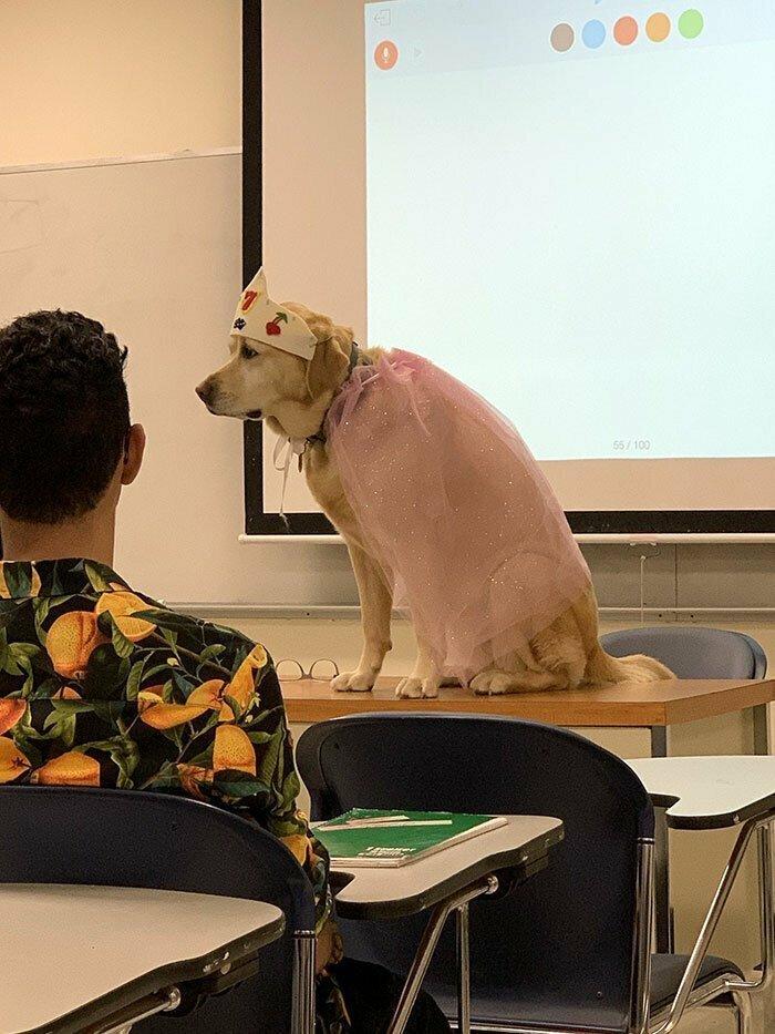 """9. """"Собака нашего учителя"""""""