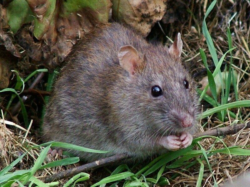 Эффект Кулиджа, отмечен например на крысах - это желание оплодотворить как можно больше партнеров