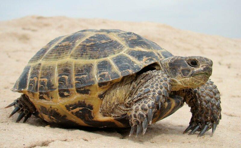 Многие животные, например змеи и черепахи, могут хранить сперму своего партнера несколько лет и забеременеть тогда, когда посчитают нужным